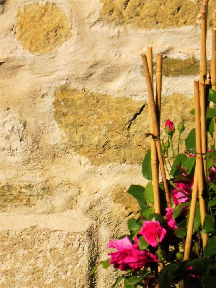 Rose addossate al muro a Valsaintes