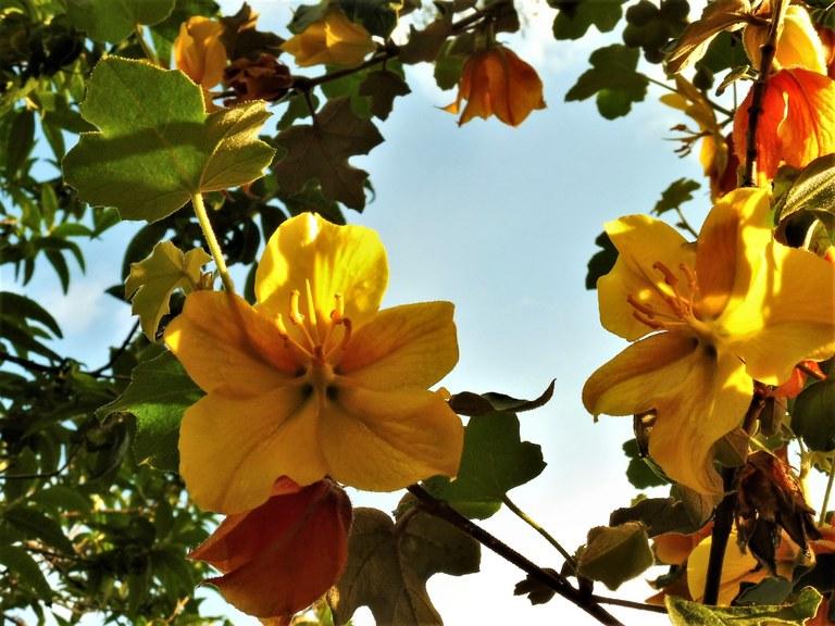 Un albero fiorito nei giardini di Valsaintes