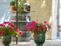 Mas de Valériole - Vasi fioriti nella corte