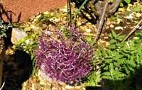 Li Poulidetto - Ancora un particolare del giardino