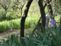 Li Poulidetto - Il giardino