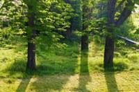 Bastide de l'Adrech, gli alberi secolari