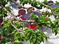 Hotel Canto Cigalo - Relax in giardino
