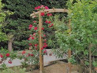 Domaine de l'Aufrêne, le rose