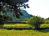 Le Barroux, Mas de la Lause, paesaggio