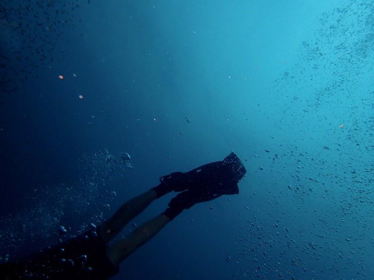 A passeggio sotto il mare