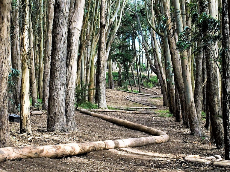 Andy Goldsworthy, Wood line