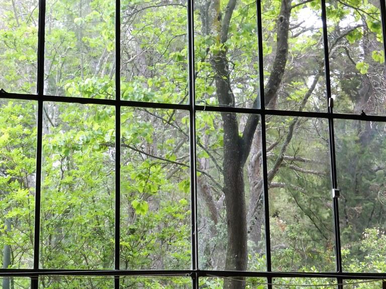 Atelier Cezanne, la luce che arriva da nord