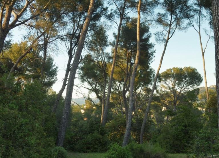Attrapp'Rêves - La pineta di Allauch