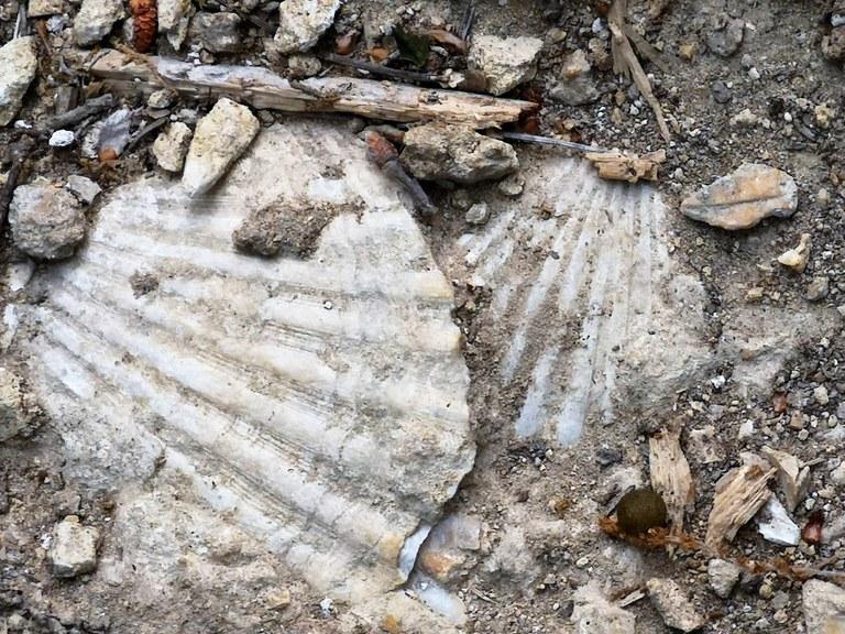 Bastide du Laval, fossili lungo il sentiero degli ulivi