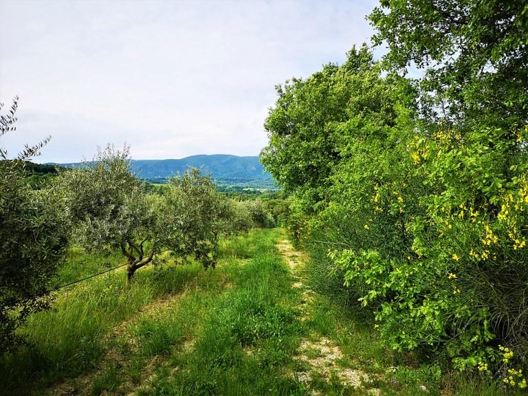 Bastide du Laval, lungo il sentiero degli ulivi
