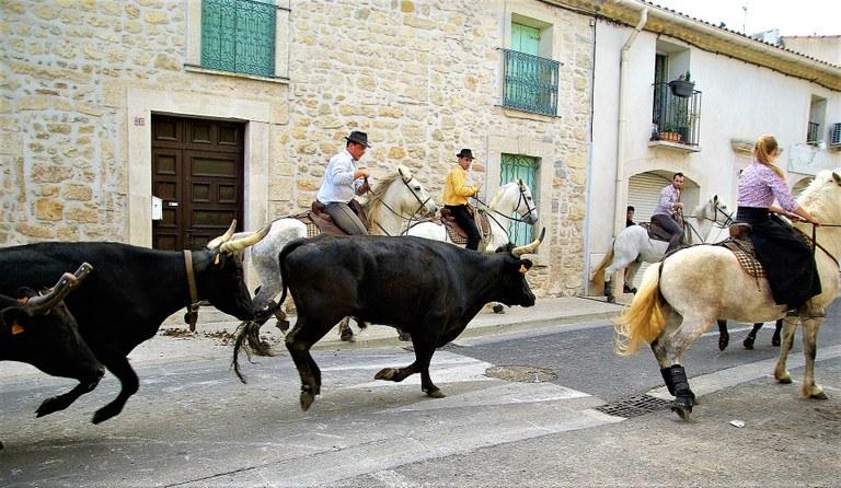 Camargue, tori e gardians