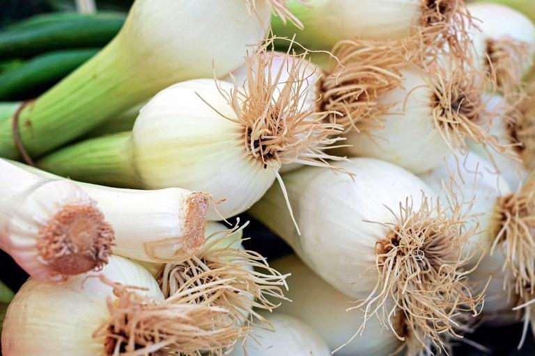 Cipollotti da affettare per l'insalata nizzarda