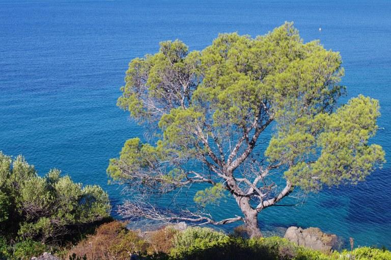 Costa del Mediterraneo francese