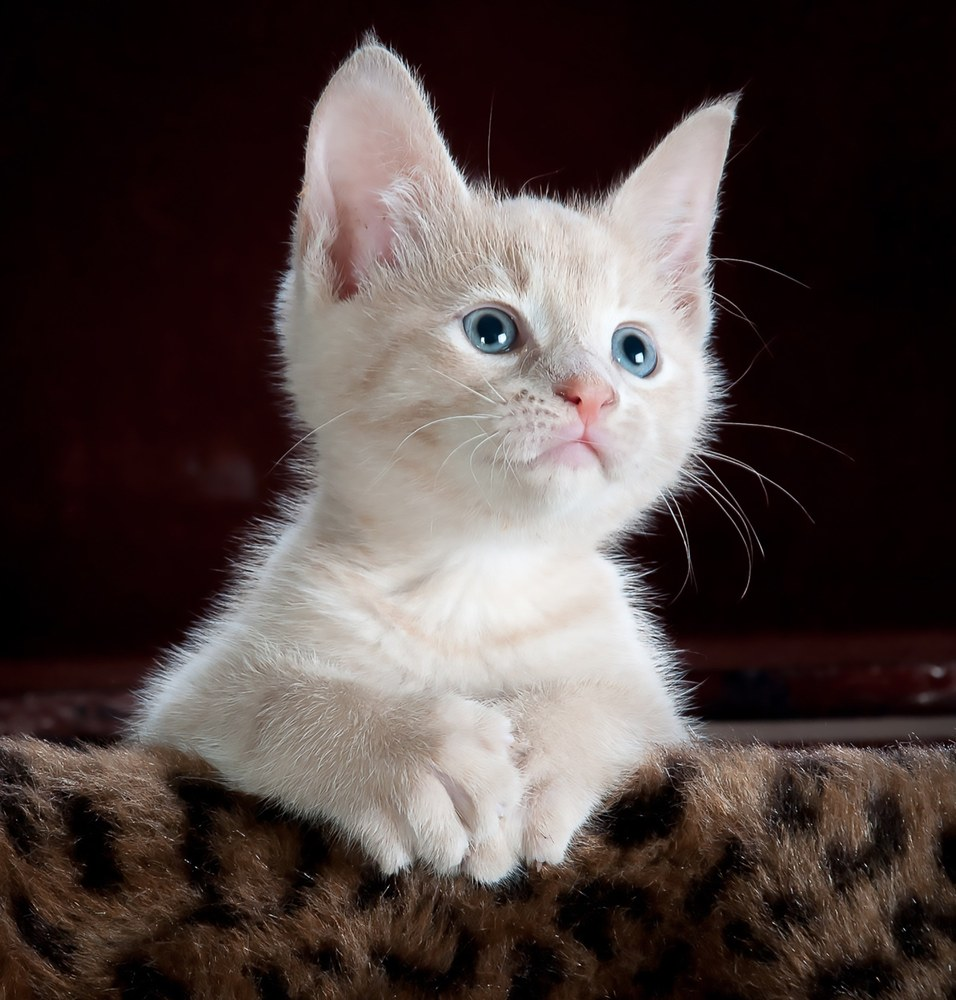 Da Mon Chat Pitre ogni gatto ha una storia da raccontare