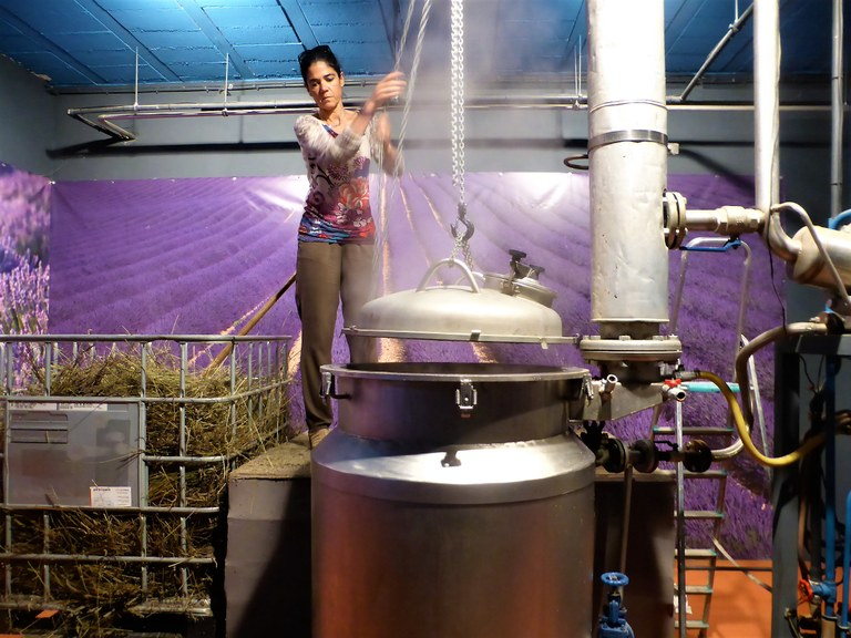 Distilleria Les Agnels - Véronique Agnel prepara la caldaia per il processo di distillazione