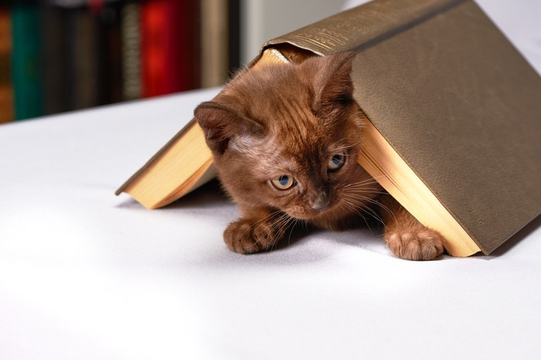 Gatti in cerca di un rifugio tra i libri