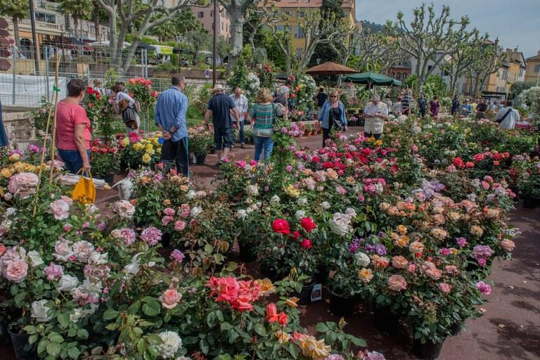 Grasse, mercato delle rose - Foto: © OT Grasse