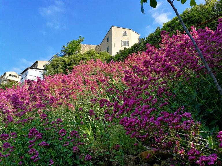 Lauris, Couleur Garance, il giardino, particolare