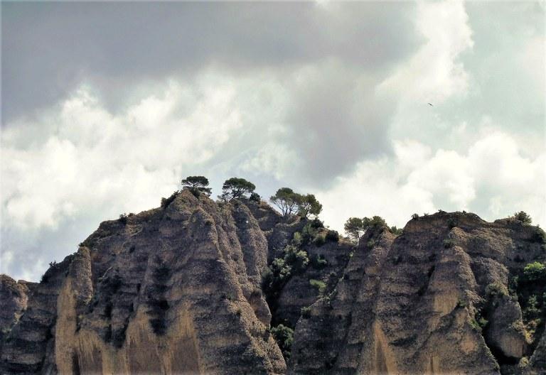 Les Pénitents des Mées, la vegetazione sulle rocce