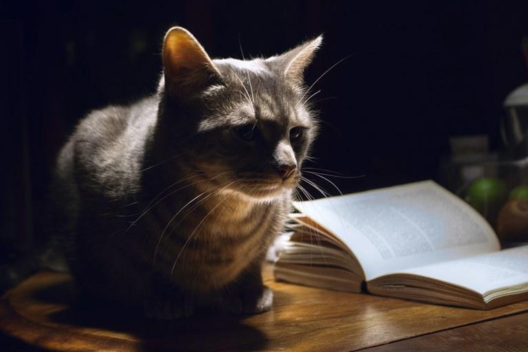 Libri e gatti