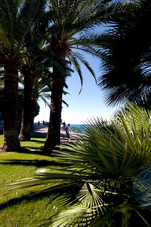 Nizza, palme sul lungomare - Foto: © A. Issock, OTC Nice