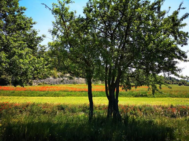 Parco naturale regionale del Luberon