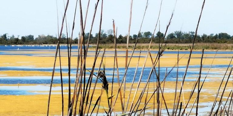 Parco naturale regionale della Camargue