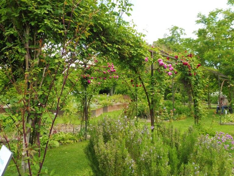 Priorato di Salagon, rose rampicanti