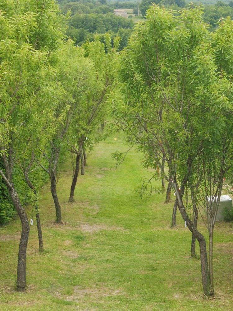 Priorato di Salagon, un viale alberato nei giardini