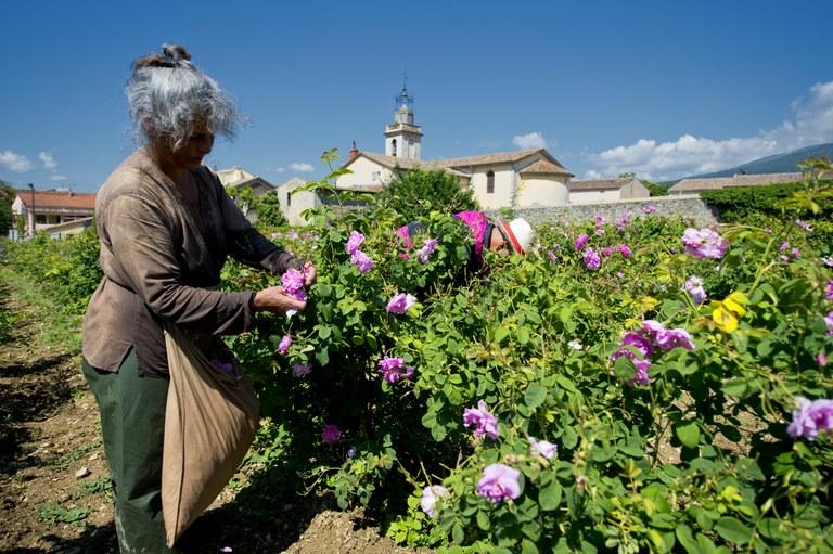 La raccolta dei fiori - Foto: © Alain Issock