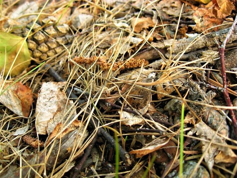 Rametti, pigne e foglie secche per fare il presepe come una volta