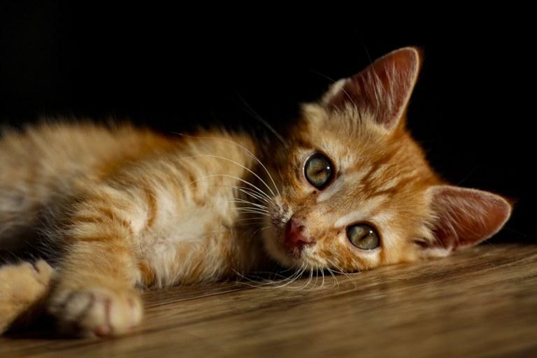Se vuoi prenderti cura di un gatto rivolgiti a un rifugio