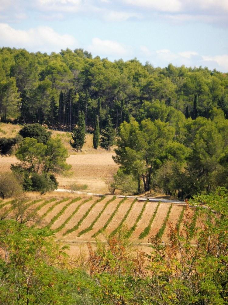 Un'estate in Provenza, paesaggio delle Bouches du Rhône