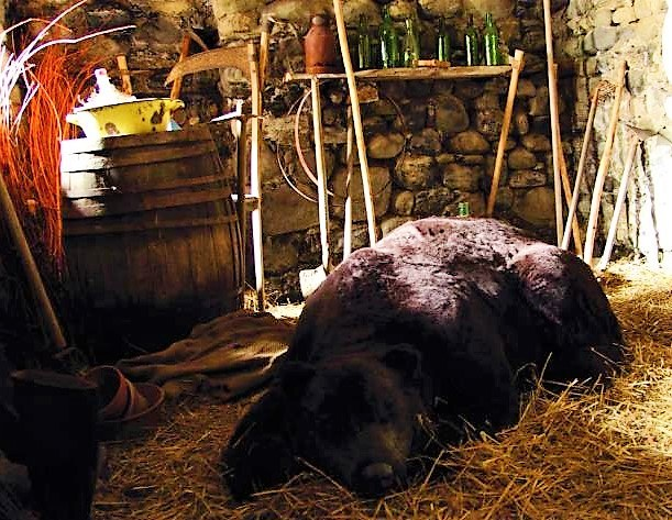 Viapac, La prigione dell'orso che dorme, di Mark Dion © Alpes-de-Haute-Provence Tourisme