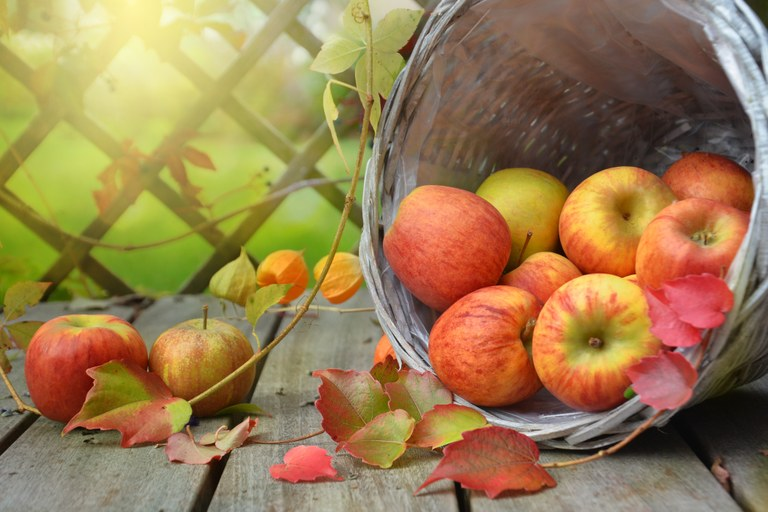 Zola regalò a Cezanne un cesto di mele