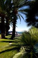 Palme sul lungomare di Nizza - Foto: © A. Issock, OTC Nice